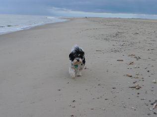 Hund am Strand auf Norderney