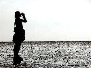 Natur Wattenmeer